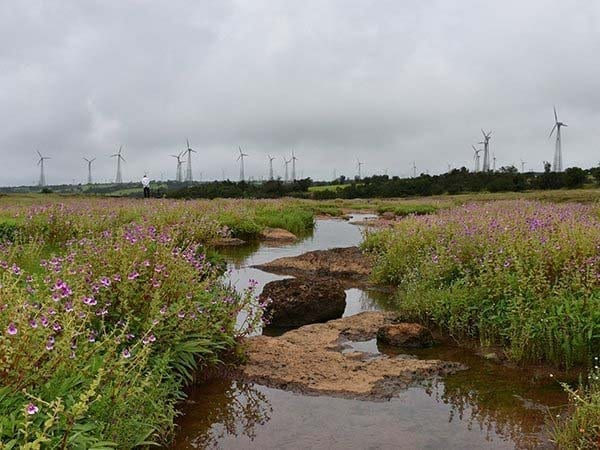 Kaas Plateue of Flowers & Wind Energy Park